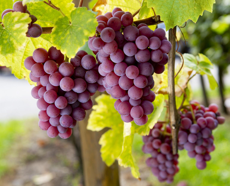 Cada vez más las bodegas apuestan por nuevos sabores creando vinos de autor con carácter propio