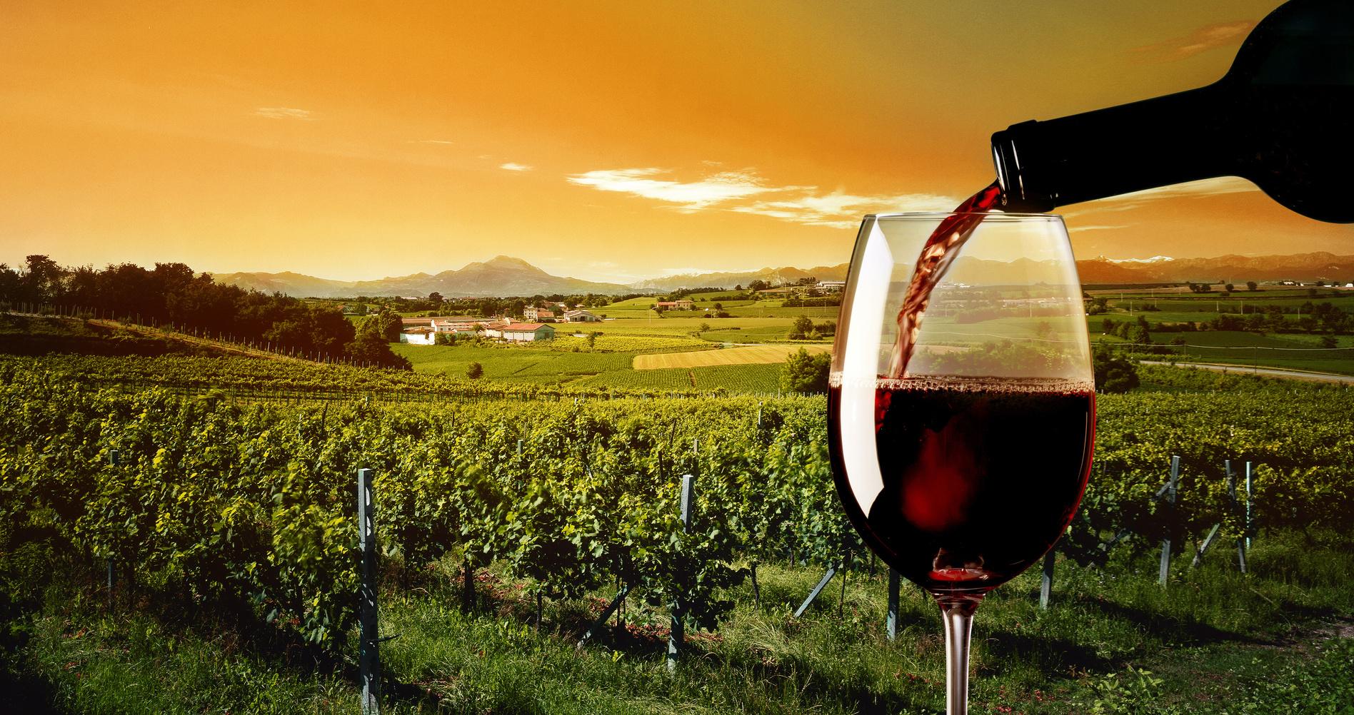 Disfruta de las mejores rutas del vino con Privilegios en Compras