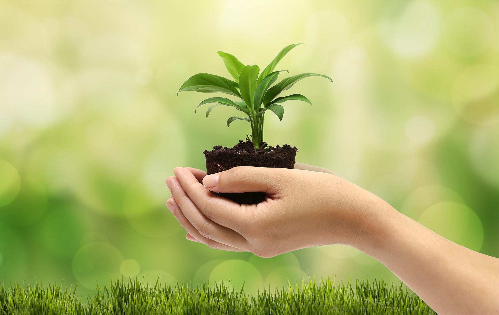 Mejora tu salud con las plantas de interior